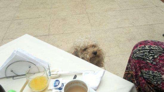 La Casa de Maria Rafaela : Junto a Dylan, nuestro compañero inseparable a la hora del desayuno