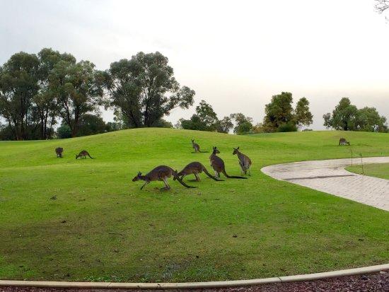The Vines, Australia: photo2.jpg