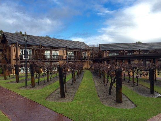 The Vines, Australia: photo4.jpg