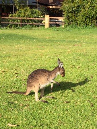 The Vines, Australia: photo9.jpg