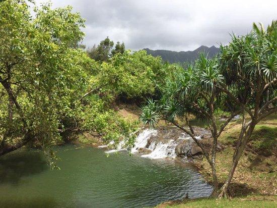 Kilauea, HI: Silver Falls Ride
