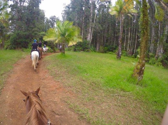 Kilauea, Χαβάη: Silver Falls Ride