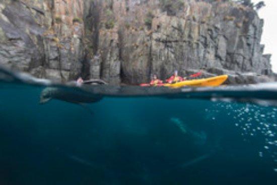 Tasmania, Australia: Roaring 40s Kayaking
