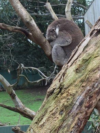 Каус, Австралия: photo2.jpg