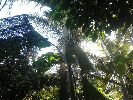 Parnell Rose Gardens: Walk through the gardens