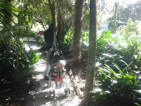 Parnell Rose Gardens: Path into gardens