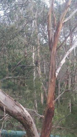 Cowes, Australien: DSC_1584_large.jpg