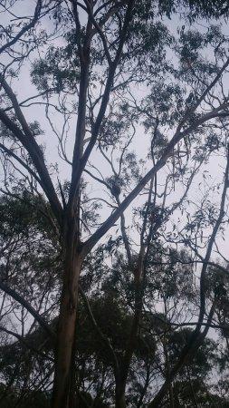 Cowes, Australia: DSC_1581_large.jpg