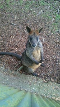 Cowes, Australien: _20160710_130359_large.jpg