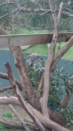 Cowes, Αυστραλία: DSC_1664_large.jpg