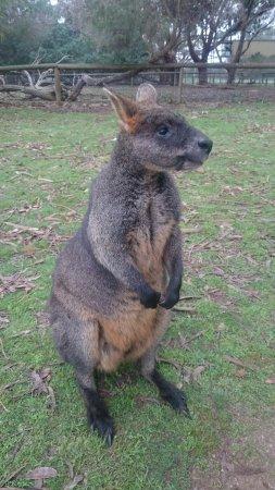 Cowes, Αυστραλία: DSC_1644_large.jpg