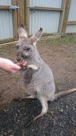 Cowes, Αυστραλία: DSC_1635_large.jpg