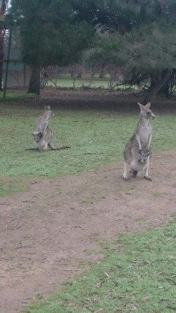 Cowes, Australien: DSC_1621_large.jpg