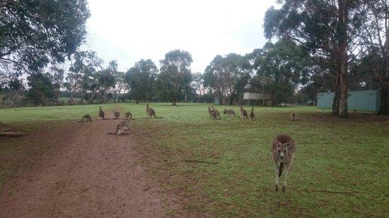 Cowes, Austrália: DSC_1622_large.jpg