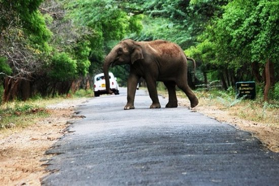 Chinnar Wildlife Sanctuary: Dont missing chinnar forest