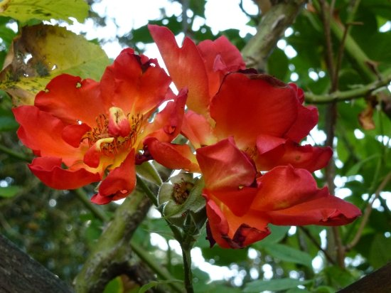Beau jardin photo de les chemins de la rose dou la fontaine tripadvisor - Jardin de la rose doue la fontaine ...