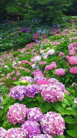 Katahara Tourist Association: photo4.jpg