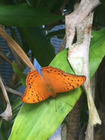 Coffs Harbour Butterfly House: photo0.jpg