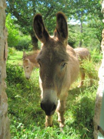 Riols, França: Pythios et Helios, nos 2 ânes