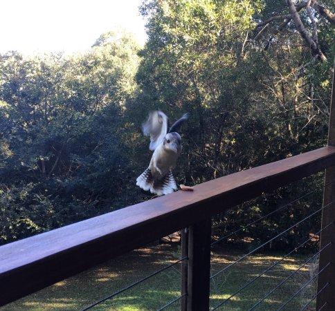 Flaxton, Australia: photo4.jpg