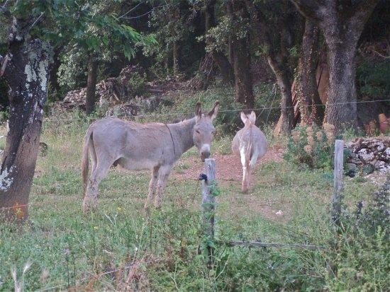 Riols, França: les ânes