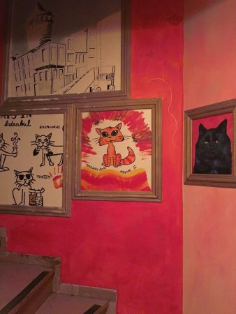 Stray Cat Hostel: Awesome stay at Stray Cat!