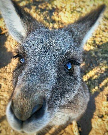 Vacy, Australia: FB_IMG_1468237082345_large.jpg