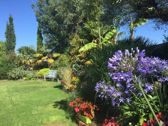 L'Oliveraie - Chambres d'Hôtes : Le jardin