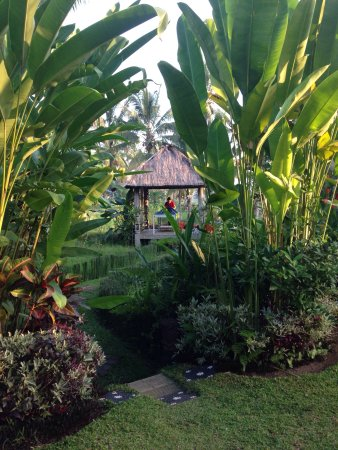 Hati Padi Cottages: photo2.jpg