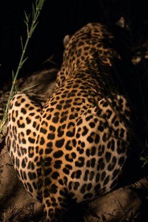 Lion Sands River Lodge: 1R1A2248_large.jpg