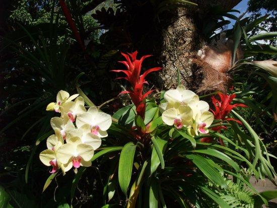 Fleur Du Jardin Botanique Picture Of Jardin Botanique De Deshaies Deshaies Tripadvisor