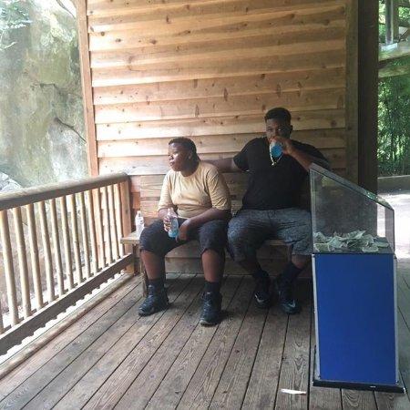 Asheboro, Carolina del Norte: my boys taking a break and watching the monkeys