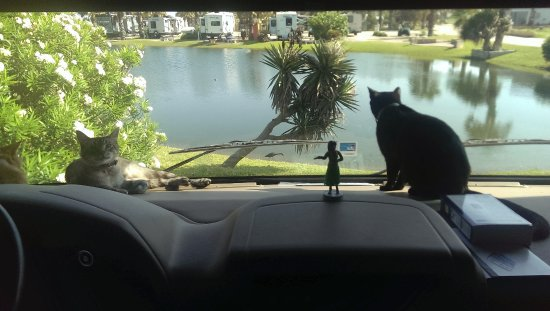 Gulf Waters Beach Front RV Resort: Our Travelers looking out the frond windwo of our Motorhome.