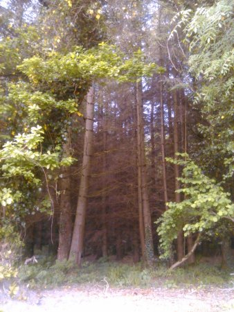 Multyfarnham, Irlanda: Beautiful woods behind house.