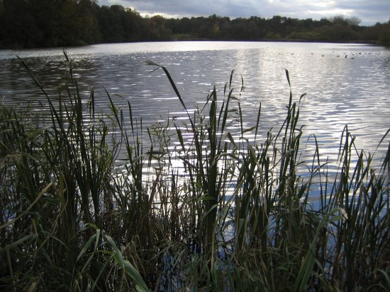 Brenchley, UK: Furnace Pond