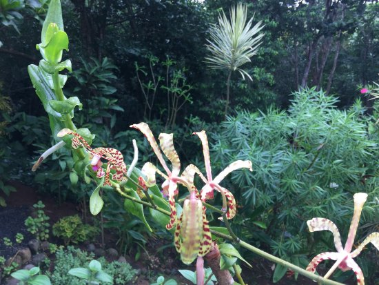 Calibishie, Dominica: The garden and views