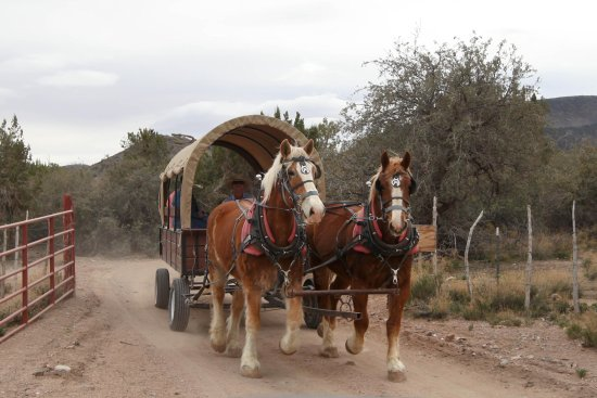 Meadview, AZ: Horse drawn wagon ride