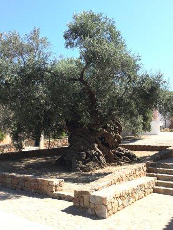 Вувес, Греция: Flott tur til oliven tre museet i Vouves.