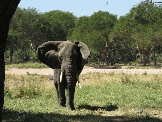 Ruaha National Park, Tanzânia: 20160701114314_large.jpg