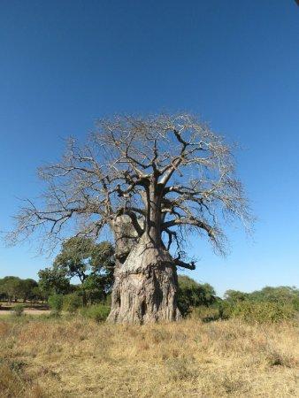 Ruaha National Park, Tanzânia: 20160701085650_large.jpg