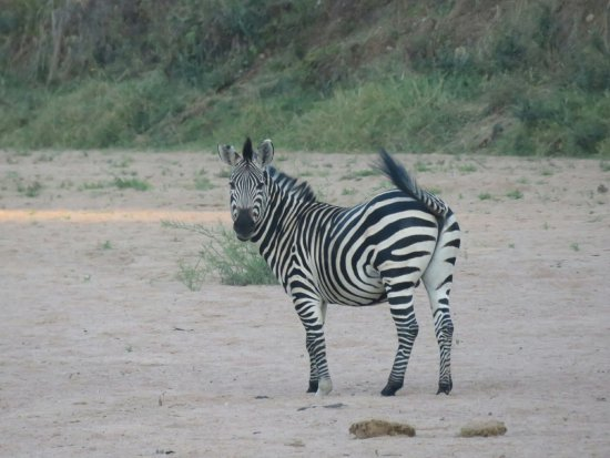 Ruaha National Park, Tanzânia: 20160701181308_large.jpg