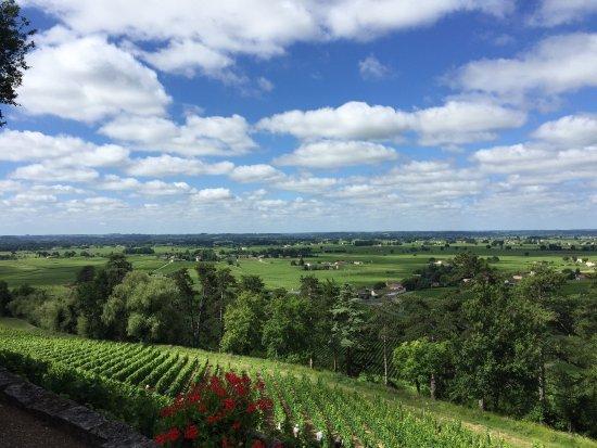 Bella Wine Tours : photo2.jpg