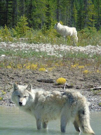 Golden, Kanada: Two of our guides