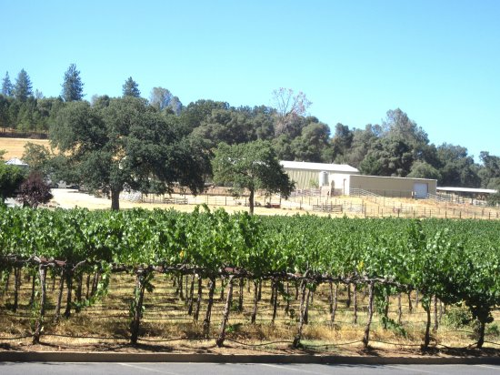 Vineyards, Ironstone Vineyards, Murphys, CA
