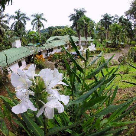Golfito, Costa Rica: Lovely flora