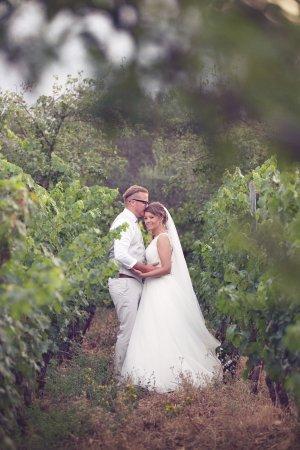 Αλίκαμπος, Ελλάδα: From the vines