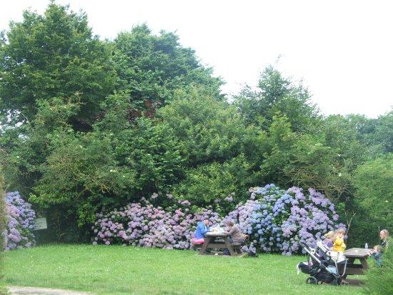 Office de Tourisme de Locronan : Une végétation accueillante