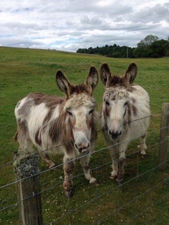 Glenearly Caravan Park: Two lovely donkeys for neighbors.
