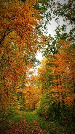 Foret de Compiegne: Forêt de Compiègne en automne