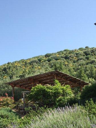 Tavernelle, Italia: Outside eating area at fontanelle farmhouse